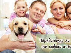 Передаются ли глисты от собаки к человеку