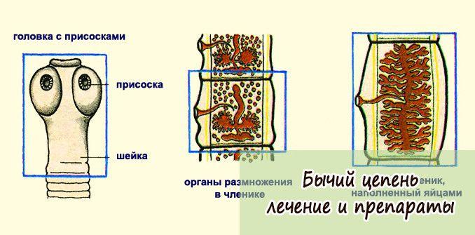 byichiy-tsepen-lechenie