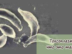 toksoplazmoz-chto-eto-takoe
