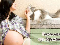 toksoplazmoz-pri-beremennosti
