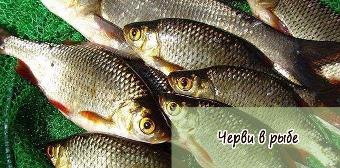 Черви в рыбе