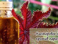 кастромое масло с коньяком от паразитов 2